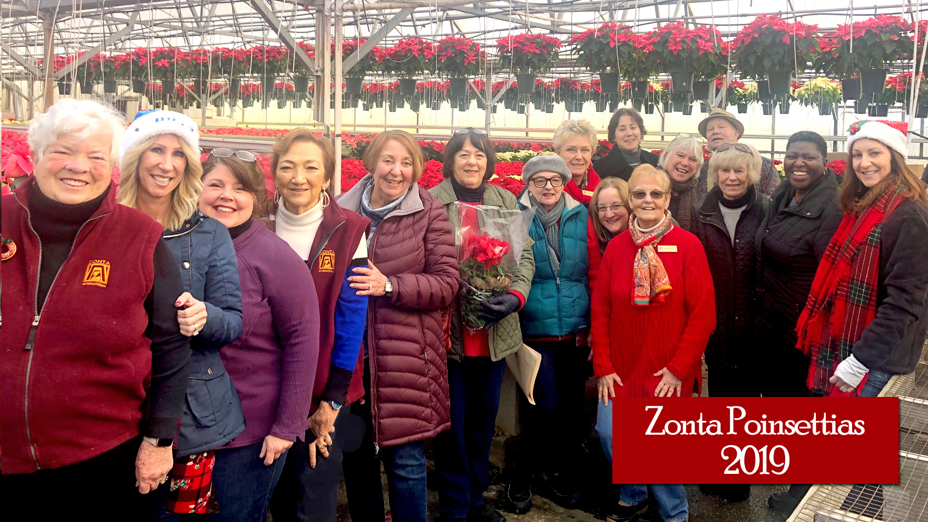Click to order amazing, beautiful holiday gifts... poinsettia and cyclamen sale for a good cause (helping women thrive) and safely delivered anywhere in Berkshire County 12/5.